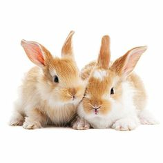 Looking to get a new #family #pet? #Rabbits require a cage with a solid floor that's a minimum of five times their size. It should be lined with newspaper and include a feeding bowl and water
