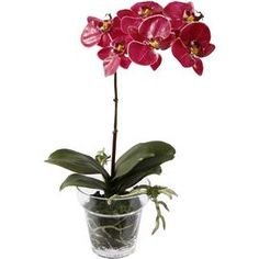 "Faux phalaenopsis orchid in a clear planter.Product: Faux floral arrangementConstruction Material: Polyester, plastic, and glassColor: FuchsiaFeatures: Includes faux orchidDimensions: 14"" H x 10"" W x 12"" D"