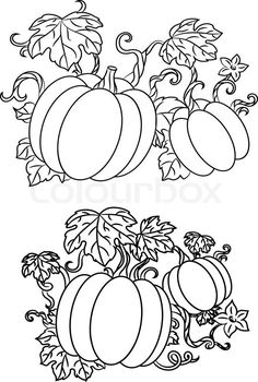 stock vector of black and white line drawings of pumpkins growing on trailing vines with pumpkin coloring pagespumpkin