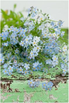 All Things Shabby and Beautiful - forget me nots