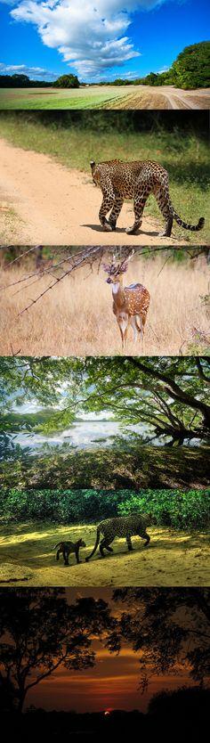 Willpattu National Park, Sri Lanka #VisitSriLanka