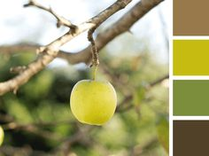 Presentation Design Tips - Color Combinations - Apple Orchard