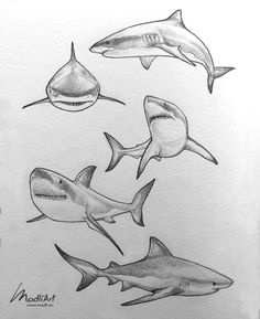 My Pins Great White Shark pencil line art sketch Pencil sketch by MadliArt animals animal sketches art Great line MadliArt Pencil Pins Shark Sketch tattoofish White Fish Drawings, Art Drawings Sketches, Sketch Art, Drawings Of Sharks, Fish Sketch, Tattoo Sketches, Fish Pencil Drawing, Tattoo Drawings, Shading Drawing