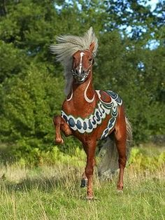 gorgeous Icelandic horse painted for a promo shot