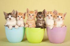 Apelidos felinos: uma lista para você se inspirar | CachorroGato