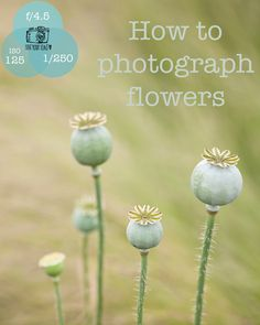 See what lenses I prefer to use when photographing flowers. Photography Courses, Photography Tips, Little Camera, Flower Photography, Cottage Gardens, Photography For Beginners, Camera Phone, Love Flowers, Lenses