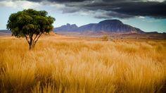Madagaskar Savanne im Madagaskar Reiseführer http://www.abenteurer.net/2261-madagaskar-reisefuehrer/