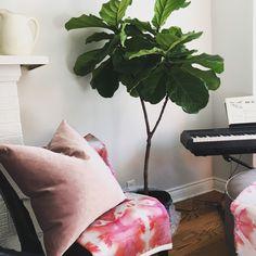 Two-Toned velvet pillows available at ELTE mkt in Toronto designed by J Vine Studio Textile Prints, Textile Design, Velvet Pillows, Throw Pillows, Designer Pillow, Vines, Toronto, Studio, Spring