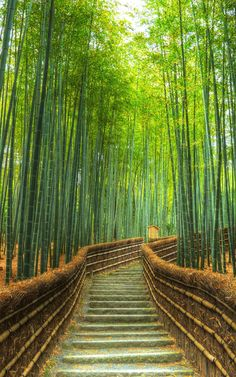 A tranquil bamboo grove at Adashino Nenbutsu-ji in Kyoto. Bamboo Landscape, Bamboo Garden, Beautiful Nature Wallpaper, Beautiful Landscapes, Bamboo Forest Japan, Beautiful World, Beautiful Places, Landscape Wallpaper, Bamboo Wallpaper