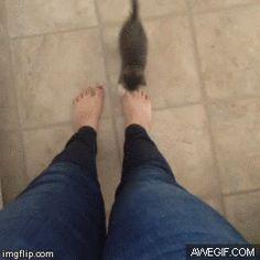 Funny cats - part 75 (35 pics + 10 gifs )