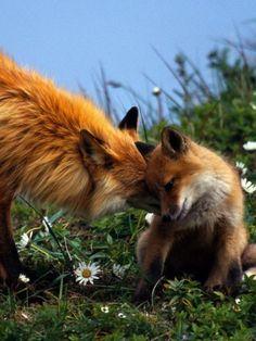 #FOX#