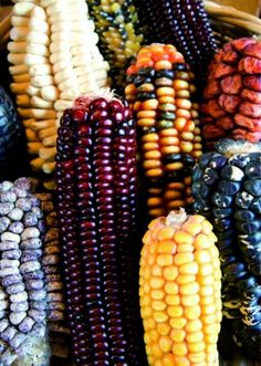 Tambu starts to harvest maiz.With the money that Tambu earns from selling the maiz she is expecting to use it for her education. Fruit And Veg, Fruits And Vegetables, Mexican Dishes, Mexican Food Recipes, Rainbow Corn, Fall Harvest, Autumn, Sweet Corn, Food Coloring