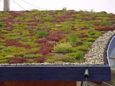 Orange roof covering, living roofs, vegetated roofing, ecoroofs — whatever you wish to dial these items. Metal Pergola, Deck With Pergola, Backyard Pergola, White Pergola, Patio Roof, Green Roof Benefits, Sedum Roof, Green Roof System, Living Roofs