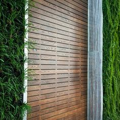 A feature wall with natural greenery makes for a nice picture. #wall #designs #feature #landscape #siding #ash #thermallytreated #Novawood #facade #building #eco #green #fsc #toronto #losangeles #chicago #newyork #wood #montreal #construction #materials #wallpatterns #natural #slatwall #exterior #interior #building #muskoka #architects #designers