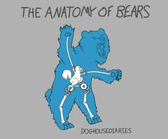 Anatomy of bears