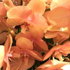 orchids 🧡 by ___ Orange Aesthetic, Aesthetic Colors, Plants Are Friends, Orange You Glad, No Rain, After Life, Just Peachy, Flower Power, Beautiful Flowers