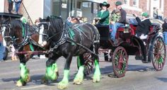 Green Clydesdales? Only in Butte MT on St. Patrick's Day