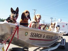 Search & Rescue Dog Team.