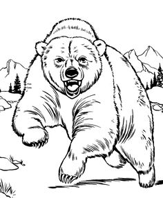 Angy Bear Coloring Picture For Kids