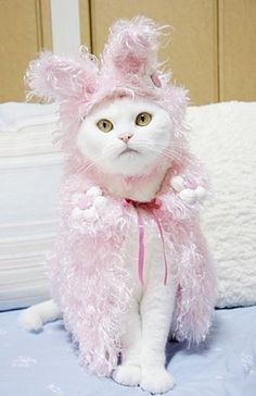 Every white cat should have a pink fluffy cape!