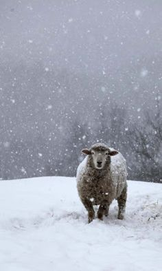 This would be a great photo for any animal in a snow storm. Dog, cow, horse, etc.