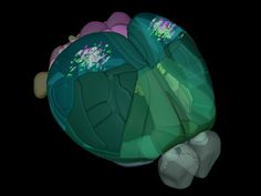 Allen Institute for Brain Science announces mapping of the mouse cortex in 3D