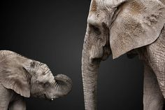 Baby elephant and mother at the Hogle Zoo, SLC, Utah. Experimenting with background replacement.