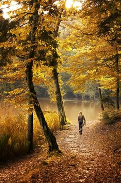 euph0r14:  nature | Autumn Walk | by lancedancevance | http://ift.tt/1QUWx0H