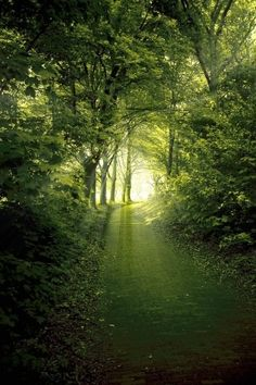 For a mind full of paths. Forest Path, Magic Forest, Forest View, Dark Forest, Beautiful World, Beautiful Places, Magic Places, Mystical Forest, Walk In The Woods