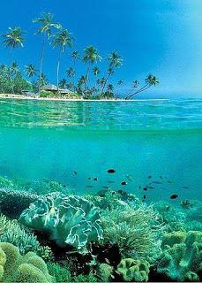 Wakatobi, Southeast Sulawesi, Indonesia.