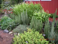 Brilliant 40+ Popular Herb Garden Plants that Need to be in Your Home https://decoredo.com/9008-40-popular-herb-garden-plants-that-need-to-be-in-your-home/