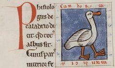 Medieval Bestiary : Caladrius Gallery