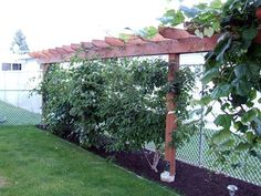 A mature kiwifruit vine can produce more than 200 pounds of fruit. (http://www.organicgardening.com/learn-and-grow/kiwi-fruit-growing-guide). Supposedly only to zone 8 and I'm in 9; they appear to be a challenging plant to grow.