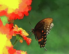 Butterfly Marmalade by Olahs Photography
