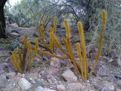 Check out Sonoran Desert's Crated art