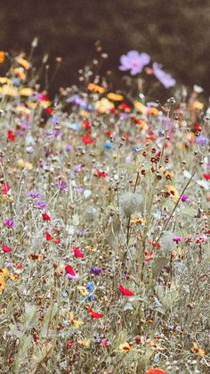 iphone wallpaper Summer is almost here! Lets celebrate this amazing news with 21 gorgeous Wildflower iPhone Wallpapers. This post may contain affiliate links. Please read my disclosur Iphone Wallpaper Preppy, Flower Iphone Wallpaper, Cute Wallpaper Backgrounds, Pretty Wallpapers, Aesthetic Iphone Wallpaper, Aesthetic Wallpapers, Floral Wallpapers, Iphone Backgrounds, Wallpaper Plants
