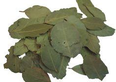 O louro (Laurus nobilis) é muito usado na culinária por causa de seu sabor marcante, especialmente temperando pratos como feijão.