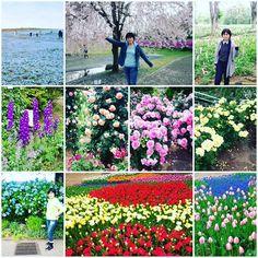 【luna.luna1010】さんのInstagramをピンしています。 《☆今年の上半期は色んな花畑に行ってきました(*⌒▽⌒*) とてもキレイで、お花が大好きな私は幸せ気分でした♡ 気 #花畑  #お花大好き  #幸せな気分  #桜 #チューリップ #モルフィネ  #バラ  #アジサイ #ルピナス #とてもキレイでした  #花の写真  #風情 #自然 #フラワー #photo  #beauty》