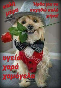 Beautiful Pink Roses, Greek Quotes, Birthday Wishes, Animals, Texts, Tattoos, Decor, Animales, Dekoration