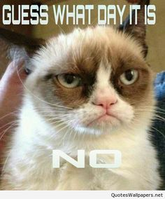 Funny Grumpy Cat Hump Day picture