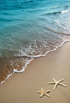 two starfish on a beach by Liliia Rudchenko on @creativemarket