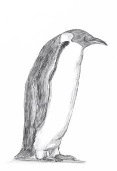 How to learn to draw a spider a simple pencil step by step Penguin Sketch, Penguin Drawing, Charcoal Paint, Pencil Art Drawings, Watercolor Animals, Learn To Draw, Display Ideas, Penguins, Spider