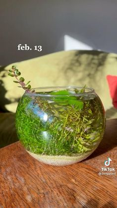Mini Terrarium, Garden Terrarium, Garden Plants, Terrarium Ideas, Indoor Garden, Indoor Plants, Household Plants, Inside Plants, Plant Aesthetic