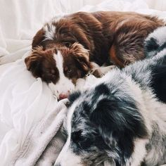Puppies growing up together as best buds Cute Puppies, Cute Dogs, Dogs And Puppies, Doggies, Sheep Dogs, Baby Dogs, Animals And Pets, Baby Animals, Cute Animals