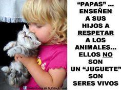 http://www.vivirbienesunplacer.com/todos/un-mensaje-de-navidad-de-las-mascotas-sin-hogar/