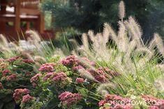 Trawiasto-hortensjowe ranczo ze stawem - strona 254 - Forum ogrodnicze - Ogrodowisko