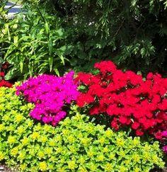5 Organic Garden Weed Controls that Work