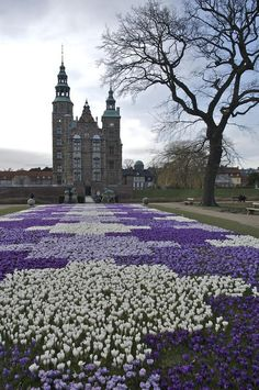 Crocus Bloom, Rosenborg Castle, Copenhagen, Denmark. --Where the Crown Jewels are housed and where there is an actual moat. In my book, Leroy loves moats...