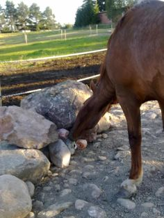 Magnificent audited horse care tips for beginners Shop favorites Paddock Trail, Horse Paddock, Horse Stables, Horse Farms, Dream Stables, Dream Barn, Tier Zoo, Horse Shelter, Shetland
