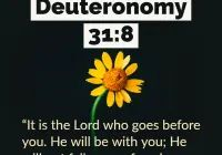 Bible Verses About Deuteronomy, Regular Update Bible Verses, Short Bible Verses, Must Read and Receive Our Blessings in Our Life. And share these Verses. Short Bible Verses, Powerful Bible Verses, Deuteronomy 31 8, Gods Glory, Worship Songs, Do Not Fear, Gospel Music, Amen, Eagle